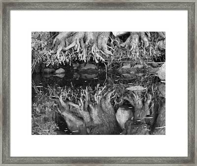 Black And White Root Reflection Framed Print by Dan Sproul