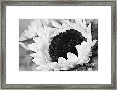 Black And White Sunflower Framed Print by Eden Baed