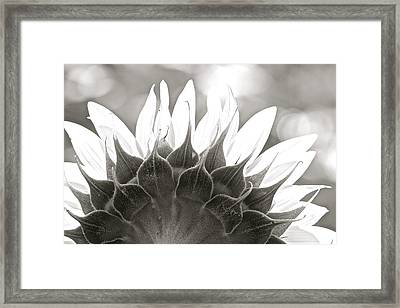 Black And White Sunflower Framed Print
