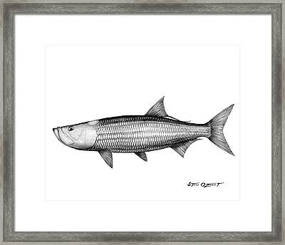 Black And White Tarpon Framed Print