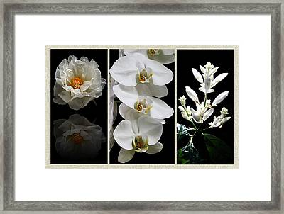 Black And White Triptych Framed Print