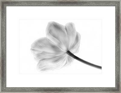 Black And White Tulip Framed Print