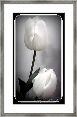 Black And White Tulips  Framed Print by Danielle  Parent