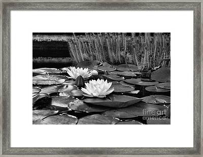 Black And White Version Framed Print