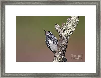 Black And White Warbler Framed Print
