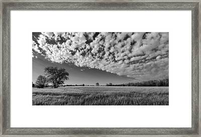 Black And White Wheat Field Framed Print