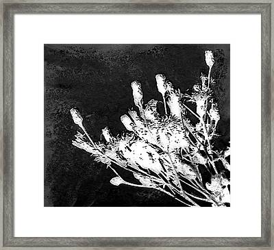 Framed Print featuring the photograph Black And White Wildflower by Shawna Rowe