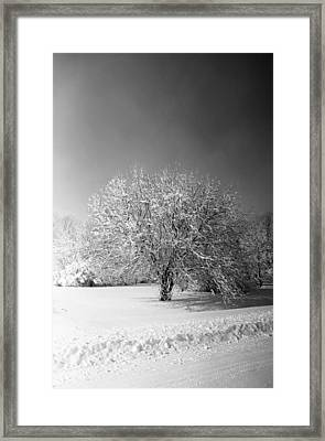 Black And White Winter Framed Print by Thomas Fouch