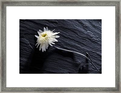 Framed Print featuring the photograph Black And White With Yellow by Trevor Chriss