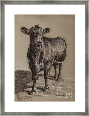 Black Angus Cow 1 Framed Print