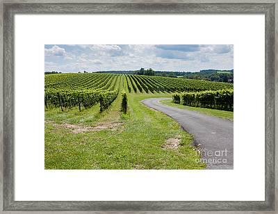 Maryland Vinyard In August Framed Print