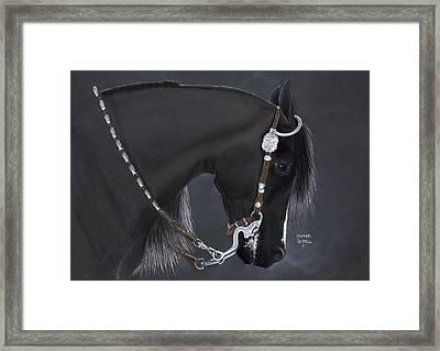 Black Arabian Framed Print
