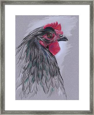 Black Australorp Hen Framed Print by MM Anderson