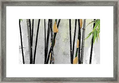 Black Bamboo #2 Sarasota Framed Print