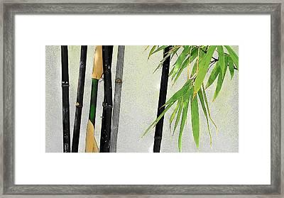 Black Bamboo Sarasota IIi Framed Print