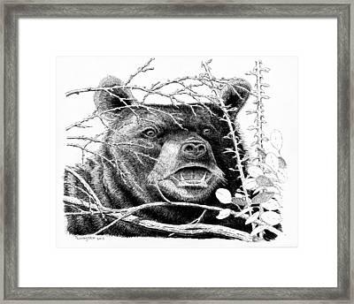Black Bear Boar Framed Print