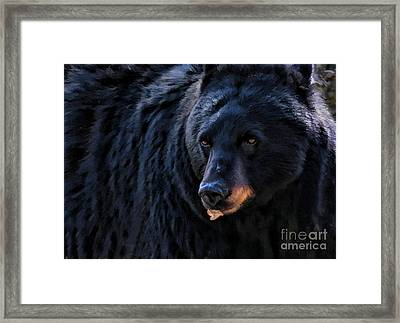 Framed Print featuring the photograph Black Bear by Clare VanderVeen