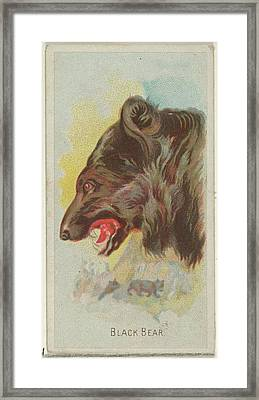Black Bear, From The Wild Animals Framed Print