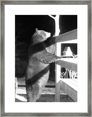 Black Bear Framed Print by Mim White