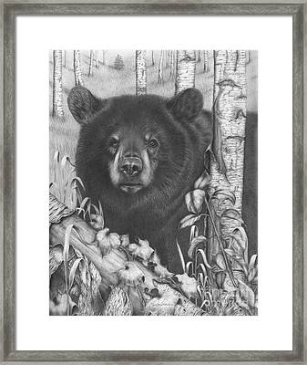 Black Bear On Newsome Creek Framed Print