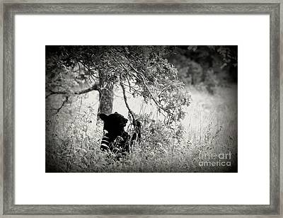 Black Bear Sitting Framed Print