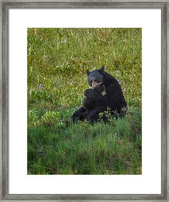 Black Bear Sow Hugging Cub Framed Print
