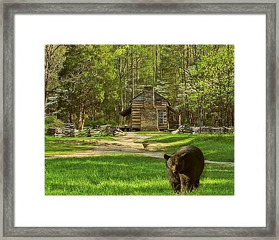 Black Bear Wandering II Framed Print