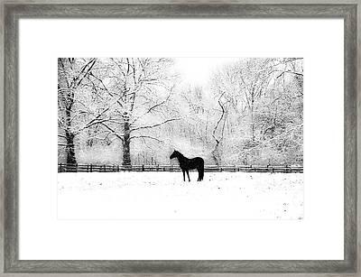 Black Beauty Framed Print by Bill Cannon