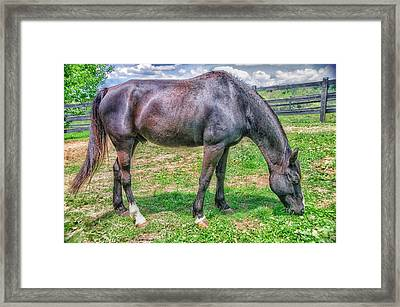 Framed Print featuring the photograph Black Beauty by Dennis Baswell