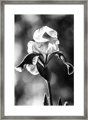 Black Beauty. Iris Series. Black And White Framed Print