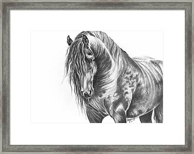Black Beauty Framed Print by Robyn Green