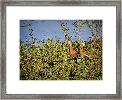 Black-bellied Whistling Ducks Framed Print by Carolyn Marshall