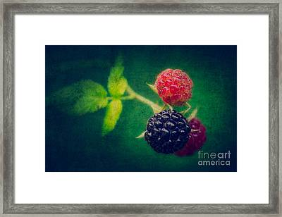 Black Berry With Texture Framed Print