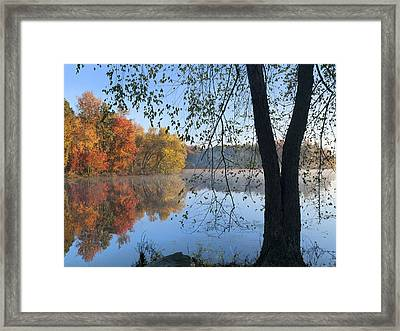 Black Birch Along Lake Bailee In Petit Framed Print by Tim Fitzharris