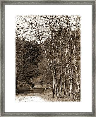 Black Birches, Zoo Park National Zoological Park Framed Print by Litz Collection