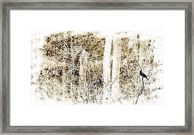 Black Bird Framed Print by Marcia Lee Jones