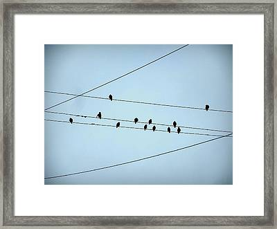 Black Birds Waiting In Blue Framed Print