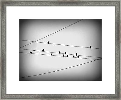 Black Birds Waiting Framed Print