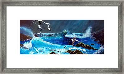 Black Browed Albatross Framed Print by Kendrew Lascelles