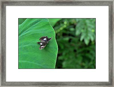 Black Butterfly Framed Print by Achmad Bachtiar