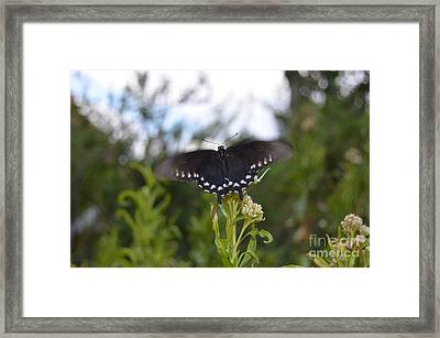 Black Butterfly Wing Macro Motion Blur At Bottom Of Grand Canyon Framed Print by Shawn O'Brien