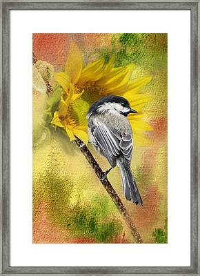Black Capped Chickadee Checking Out The Sunflowers Framed Print
