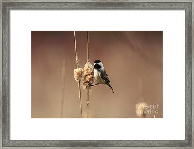 Black Capped Chickadee In The Marsh Framed Print by Inspired Nature Photography Fine Art Photography