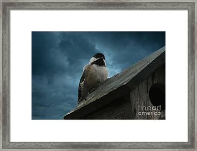 Black-capped Chickadee  Framed Print by Marjorie Imbeau