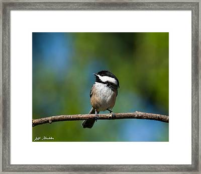 Black Capped Chickadee Perched On A Branch Framed Print