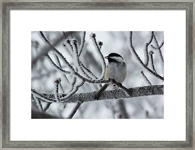 Framed Print featuring the photograph Black-capped Chickadee by Ryan Crouse
