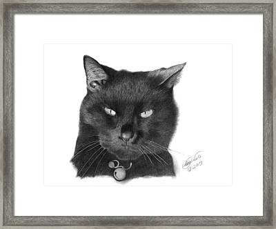 Framed Print featuring the drawing Black Cat - 008 by Abbey Noelle