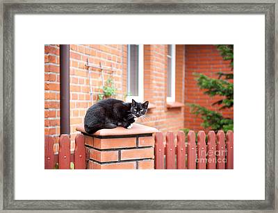 One Lonely Stray Black Cat Sitting On Fence  Framed Print by Arletta Cwalina