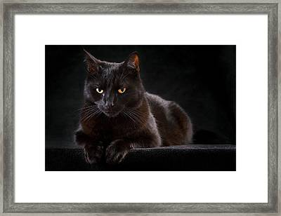 Black Cat Framed Print by Dirk Ercken