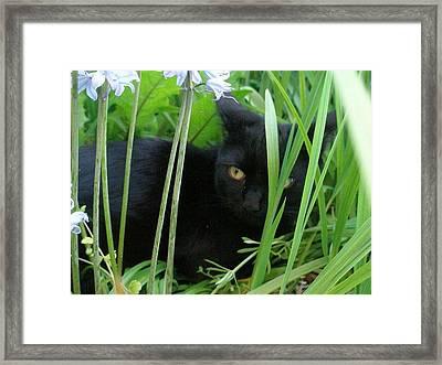 Black Cat In Long Grass Framed Print